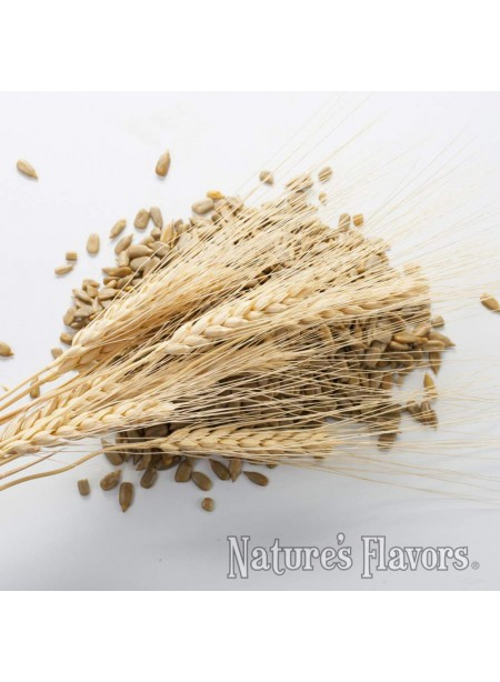 Organic Malt Flavor Concentrate