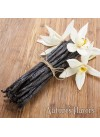 Vanilla Extract (3x Fold), without Diacetyl