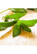 Organic Peppermint Flavor Concentrate
