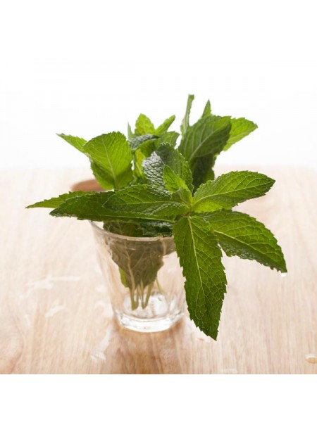 Menthol Flavor Extract Without Diacetyl, Organic