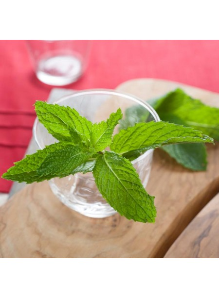 Spearmint Flavor Extract Without Diacetyl, Organic
