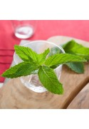 Organic Spearmint Flavor Extract Without Diacetyl