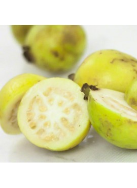 Guava Flavor Oil For Chocolate (Kosher, Vegan, Gluten Free, Oil Soluble)