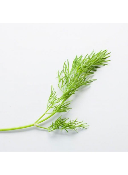 Dill Flavor Extract Without Diacetyl, Organic