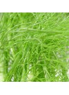 Fennel Flavor Extract Without Diacetyl, Organic