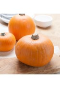 Organic Pumpkin Flavor Extract Without Diacetyl