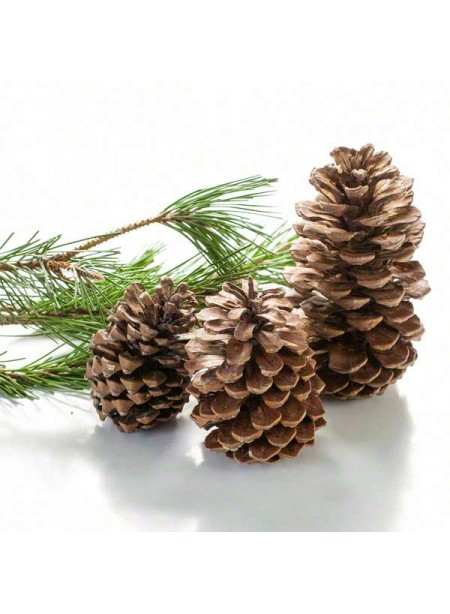 Pine Flavor Extract Without Diacetyl