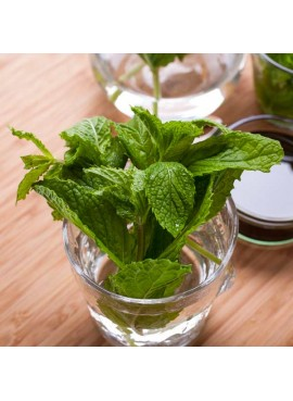 Organic Mojito Bar Mix Syrup