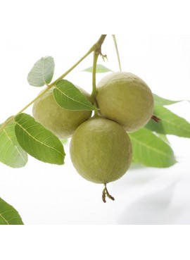 Organic Black Walnut Flavor Concentrate Without Diacetyl
