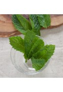 Organic Spearmint Flavor Concentrate Without Diacetyl