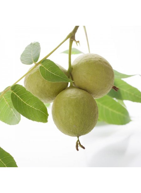 Black Walnut Flavor Concentrate Without Diacetyl