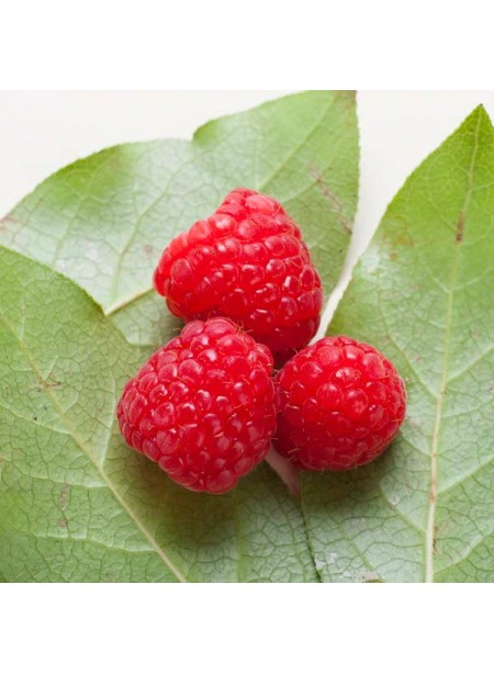 Raspberry Coffee and Tea Flavoring - Without Diacetyl