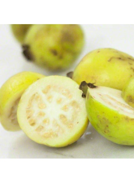 Guava Flavor Emulsion for High Heat Applications, Organic