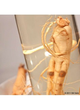 Korean Ginseng Root Extract.