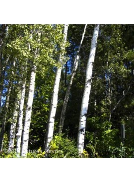 Sante Birch, Sweet Essential Oil