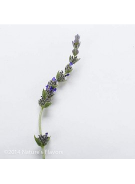 Sante Lavender (Bulgarian) Essential Oil