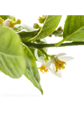 Sante Neroli Bigarade Essential Oil
