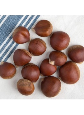 Chestnut Flavor Extract, Organic
