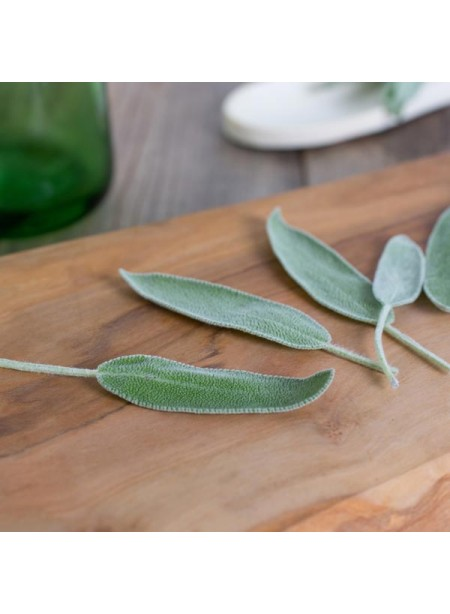 Sage Flavor Extract Without Diacetyl, Organic