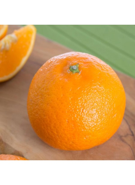 Organic Tangerine Flavor Concentrate Without Diacetyl