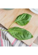 Organic Basil Flavor Extract Without Diacetyl