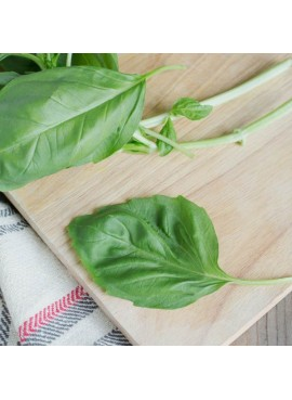 Basil Flavor Extract