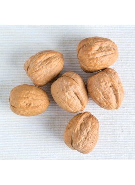 Walnut Flavor Extract Without Diacetyl, Organic