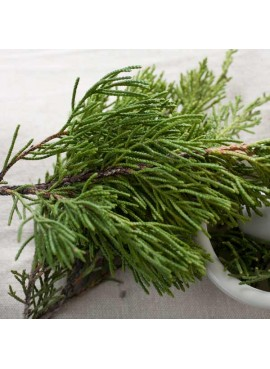 Cedarleaf Essential Oil