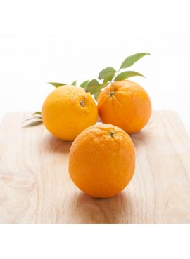 Orange (5X Fold) Essential Oil