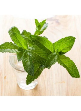 Peppermint Essential Oil (Prime Idaho)