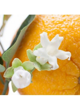 Organic Neroli Fragrance Oil (Vegan, Oil Soluble)