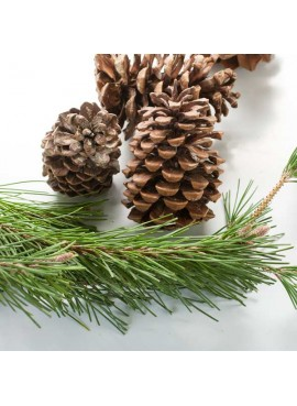 Pine Fragrance Oil (Vegan, Oil Soluble)