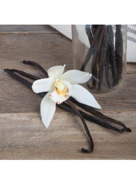 Vanilla Fragrance Oil (Alcohol Soluble)