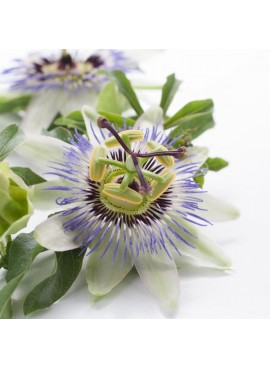 Organic Passion Flowers Fragrance Emulsion (Water Soluble)