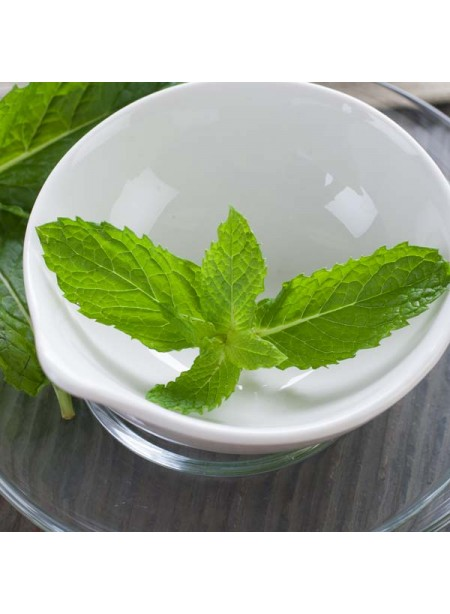 Spearmint Flavor Oil for Lip Balm, Organic