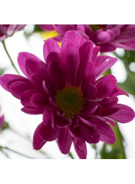 Purple Food Color from Edible Flowers Liquid, Natural Kosher, Vegan, Gluten Free, Feingold Accepted)
