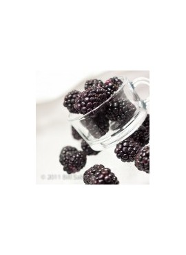 Blackberry Xylitol Powdered Coffee Syrup Just Add Water