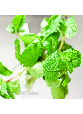 Spearmint Xylitol Powdered Coffee Syrup Just Add Water