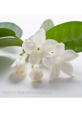 Sante Jasmine Essential Oil